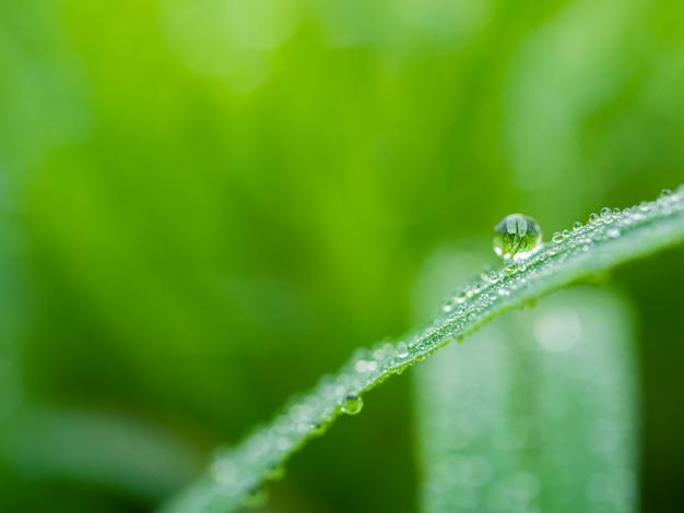 Wod krople na zielonej trawie