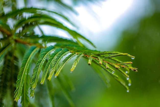 Woda deszczowa spada na zielony liść