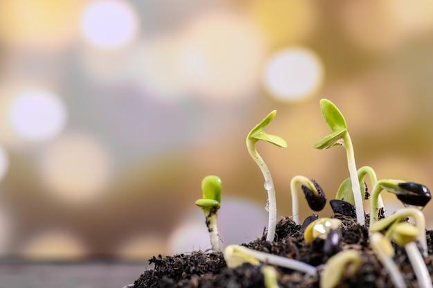 Woda Kapie Na Sadzonkę. Nowo Urodzona Roślina. Sadzenie Drzew Dla Relaksu I Rekreacji W Domu W Okresie żniw Wiosennych. Premium Zdjęcia