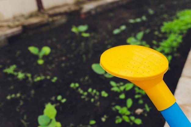Woda może i słomiany kapelusz kłaść w trawie.