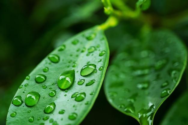 Woda na liściachtło