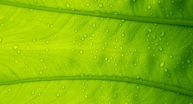 Woda na tle liści, zielony liść natura