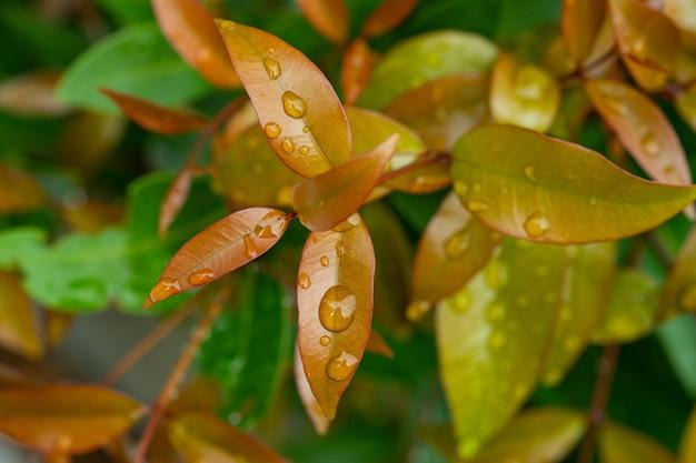 Woda na tle liści