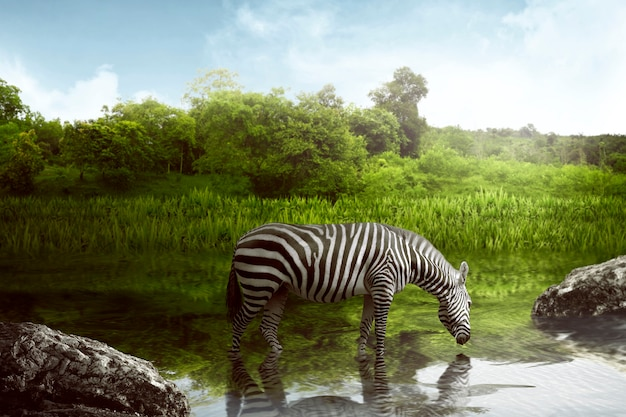 Woda pitna zebra