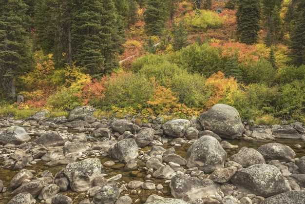 Woda płynąca pośrodku skał z drzewami o różnych kolorach