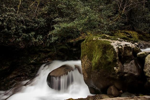 Woda spadająca ze skały pod bujną roślinnością w łaźniach afrodyty w gruzji