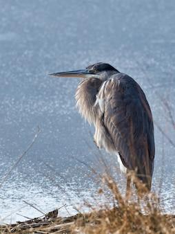 Wodny ptak z długim dziobem stojący w pobliżu jeziora w słońcu