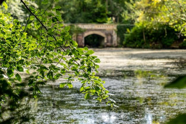 Wodny staw z mostem w marlay park.