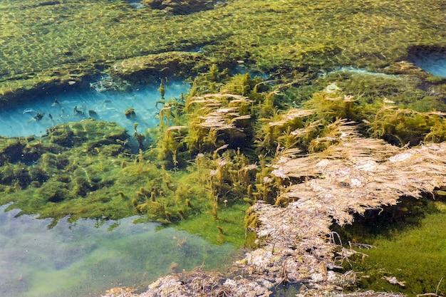 Wodorostów w krystalicznie czystej wodzie w jiuzhaigou park narodowy, chiny sichuan.