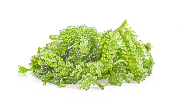 Wodorosty morskie z winogron morskich (zielony kawior), zdrowa żywność.