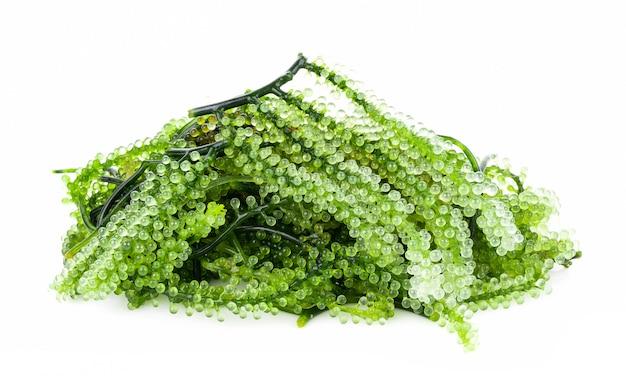 Wodorosty morskie z winogron morskich (zielony kawior)
