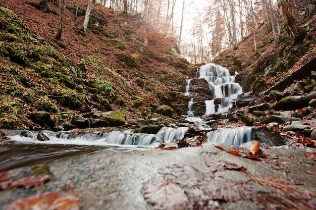 Wodospad shypit na borzhawie, wioska pylypets w karpatach. ukraina. europa. niesamowity wodospad świata w lesie jesienią. piękno świata.