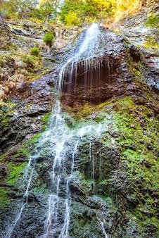 Wodospad w dzikim lesie. kaskada wodna ze skały