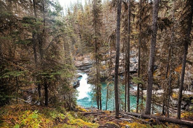 Wodospad w kanionie johnston płynący w jesiennym lesie w parku narodowym banff, kanada