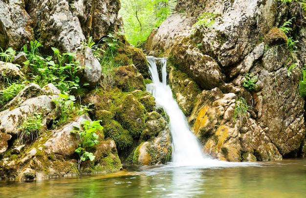 Wodospad w lesie czarnogóry