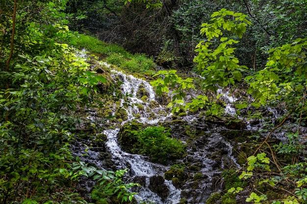 Wodospad w lesie w górach otoczony zielenią