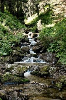 Wodospad w leśnym krajobrazie leśnym