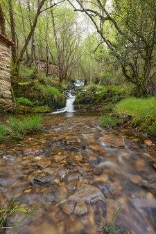 Wodospad w pięknym lesie na terenie galicji w hiszpanii.