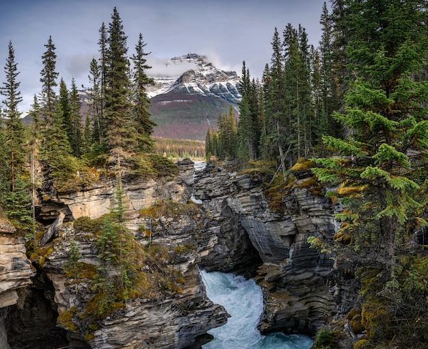 Wodospady athabasca płynące w kanionie z górami skalistymi w jesiennym lesie w parku narodowym jasper, kanada