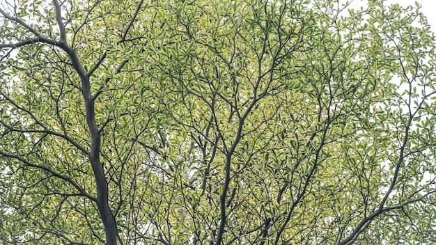 Wokół drzewa rozrzucone są zielone liście