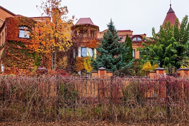 Wokół okna rośnie kolorowy liść bluszczu. jesień koncepcja tło.