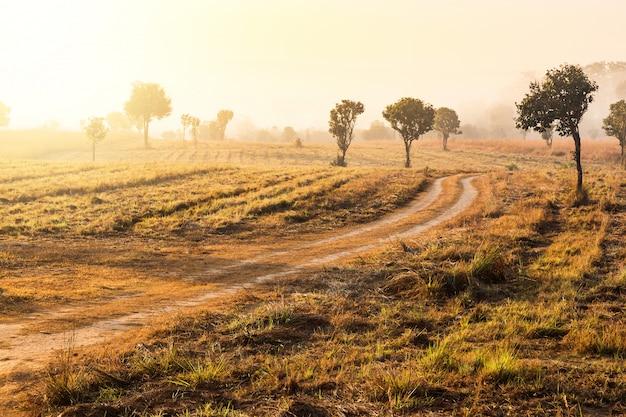Wolność i czuć się dobrze koncepcja kobiety rosnące ręce na tle wschód słońca na drodze