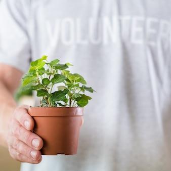Wolontariat przyjazny środowisku. ochrona przyrody. mężczyzna trzymający pielęgnowaną zieloną roślinę doniczkową.