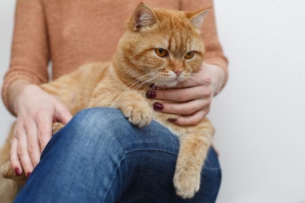 Womans ręce głaskanie zdrowy czerwony kot. ludzką ręką opieki i głaskanie puszysty kot z bliska. właściciel ręce klepie zabawnego kota. puszyste zwierzę domowe. koncepcja zwierząt domowych i stylu życia