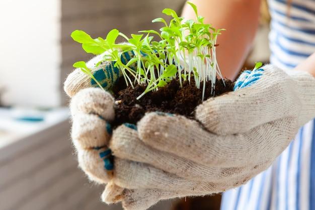 Womans ręce sadząc kiełki w doniczce z brudem lub ziemią w pojemniku