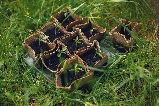 Womans ręce w rękawiczkach sadzenie młodych roślin