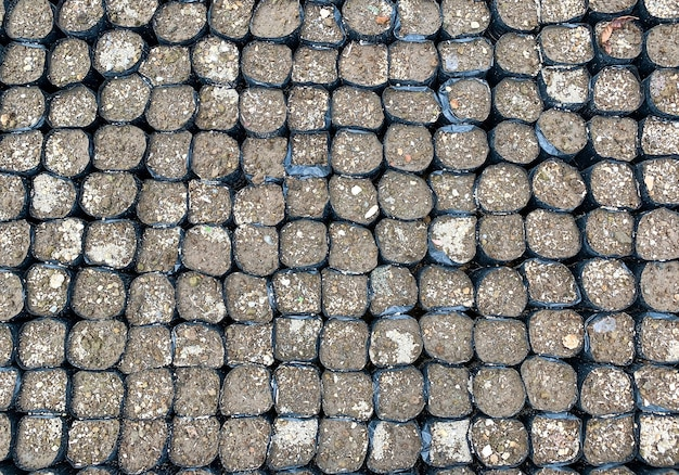 Worki foliowe zawierające ziemię i gotowe do sadzenia w szkółce