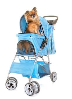 Wózek dla chihuahua