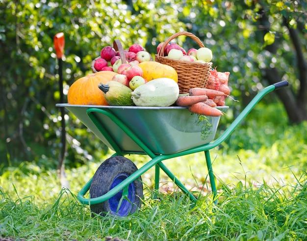 Wózek pełen zbiorów z ogrodu