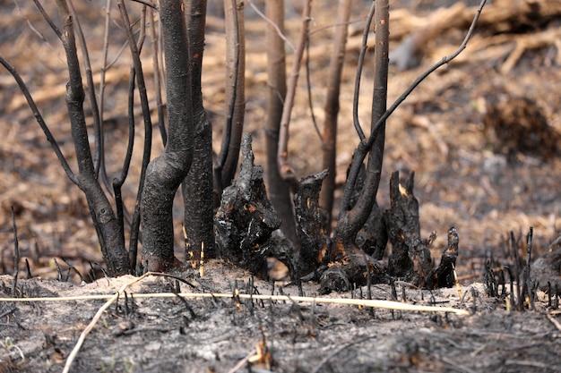 Wpływ pożaru trawy na gleby. zwęglona trawa po wiosennym pożarze. czarna powierzchnia wiejskiego pola ze spaloną trawą. konsekwencje podpalenia i pożaru ścierniska. następstwa klęsk żywiołowych.