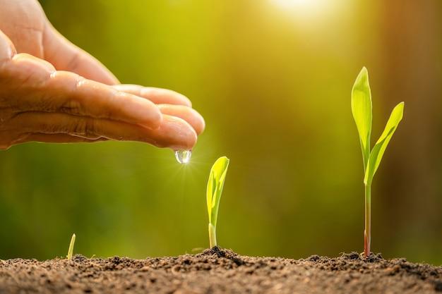 Wręcza dawać wodzie potomstwo zieleni kiełkowy dorośnięcie w ziemi na zielonej natury plamie