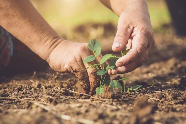 Wręcza mieniu i zasadza młodego motyliego grochowego drzewa w ziemię. zapisz świat i koncepcję ekologii