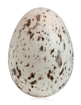 Wróbel (passer domesticus) jajko