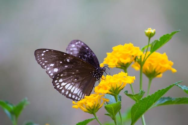 Wrona motyl na kwiat rośliny