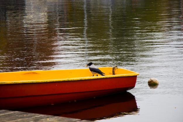 Wrona w naturze, w pobliżu wody