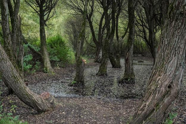 Wróżka straszny las