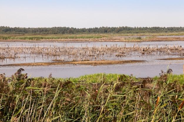 Wrzosowisko, czas letni - sfotografowano teren, na którym znajduje się bagno, koniec sezonu letniego, otwarta przestrzeń