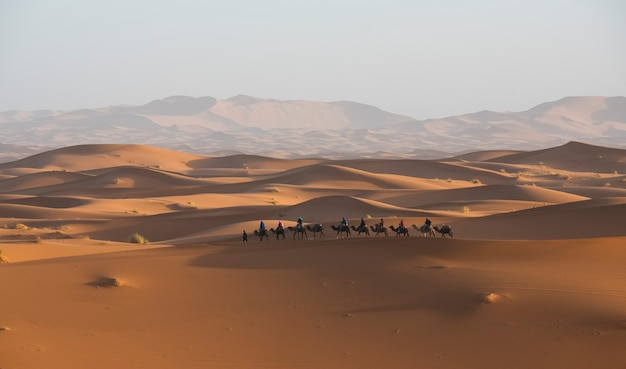 Wschód słońca na pustyni z karawaną wielbłądów