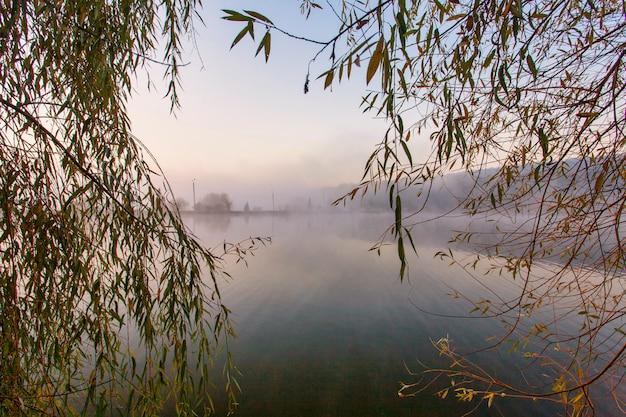 Wschód słońca nad mglistym jeziorem. laski na pierwszym planie na wybrzeżu jeziora. nad drzewami na dalszym brzegu wschodzi słońce.