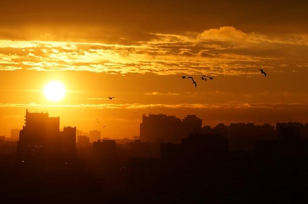 Wschód słońca nad miastem, ptaki odlatują