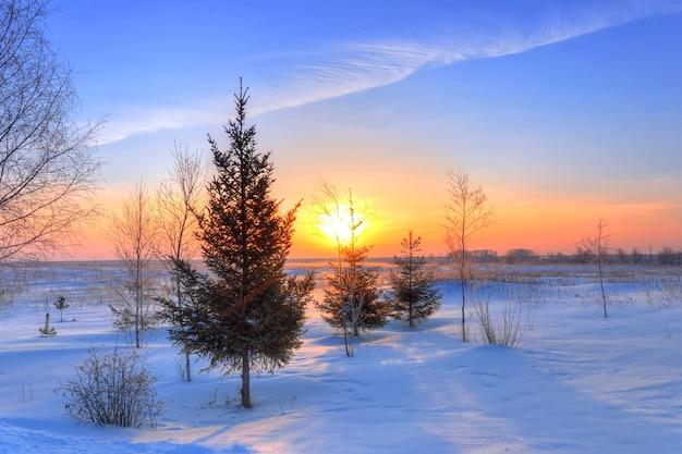 Wschód słońca w mroźny zimowy poranek nad lasem świerkowym
