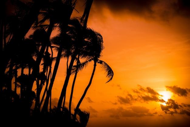 Wschód słońca z palmami