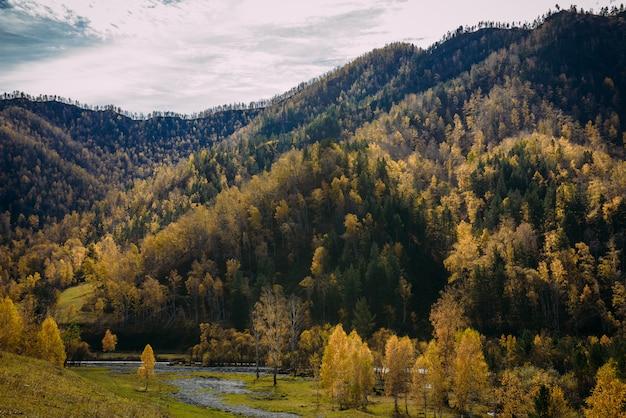 Wspaniała przyroda gór ałtaj. złota jesień, słoneczny dzień, wzgórza pokryte lasami mieszanymi, rzeka błyszcząca w słońcu