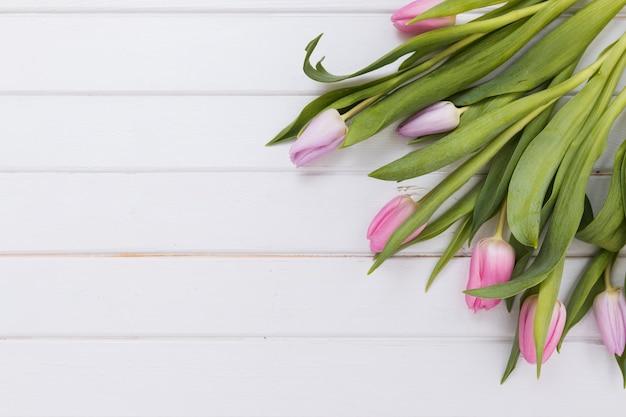 Wspaniałe delikatne tulipany na białym