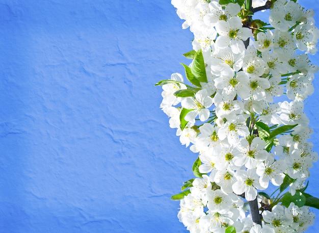 Wspaniałe kwitnące drzewo na białym tle