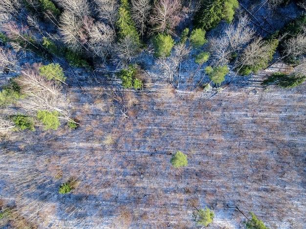 Wspaniałe ujęcie z lotu ptaka leśnej scenerii w zimie